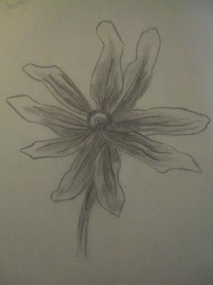 #Fleur des champs#