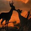 Bambi & Féline