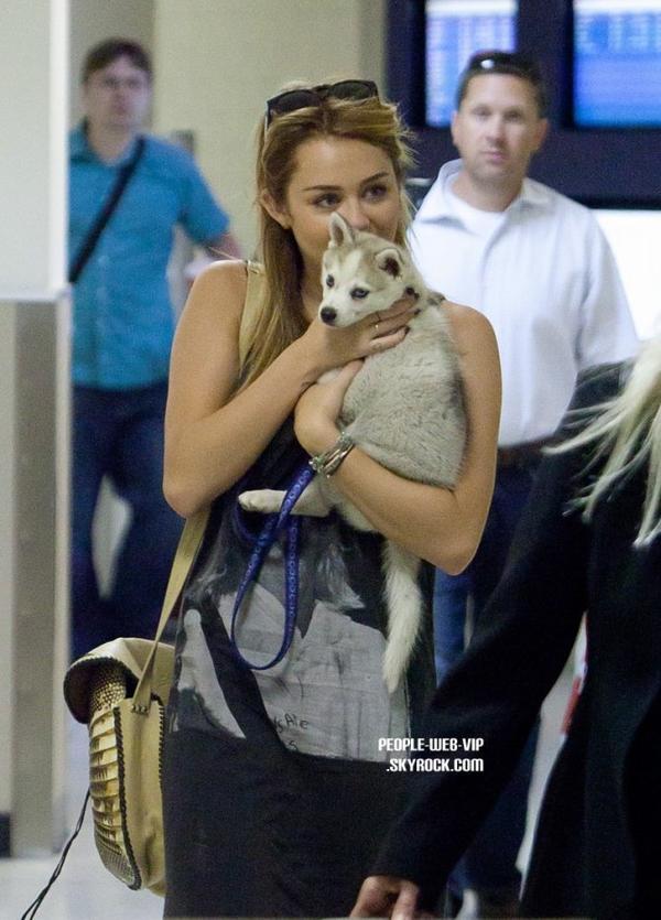 > Miley Cyrus   Miley donne des câlins a son chiot, Floyd, à leur arrivée à l'aéroport de LAX à Los Angeles (vendredi après-midi (Juillet 15).
