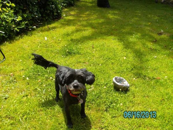 Ma chienne Sarah !!!!! qui est allée au toilettage,lol