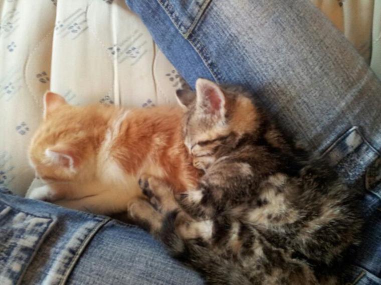 Les chattons de mon chéri