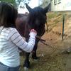 ® Paradiiz Horses
