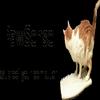 Pawsense : Systéme anti-chat pour votre calvier