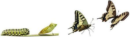 -De la chenille au papillon-