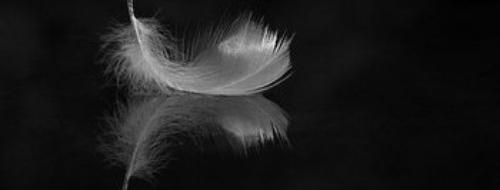 . Le baiser de L'ange - Elisabeth Chandler .