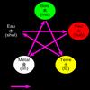 La branche des 5 éléments