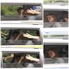- 15 Août 2010 : Kristen accompagnée de Sam Riley quittant le tournage de  'On the Road'   Pas autorisée à diffuser les photos du baiser 'Robsten' devant leur hôtel le même jour,  je vous en laisse la preuve LA (tout droits reservés par Celebuzz) je ne veux pas risquer une quelconque desactivation du blog de Linda! -