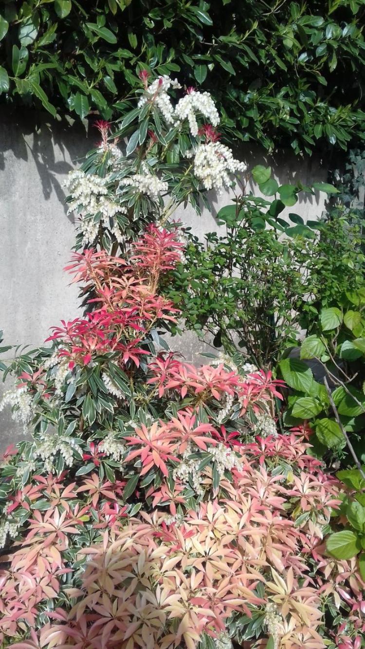voila le jardin qui prend des couleurs