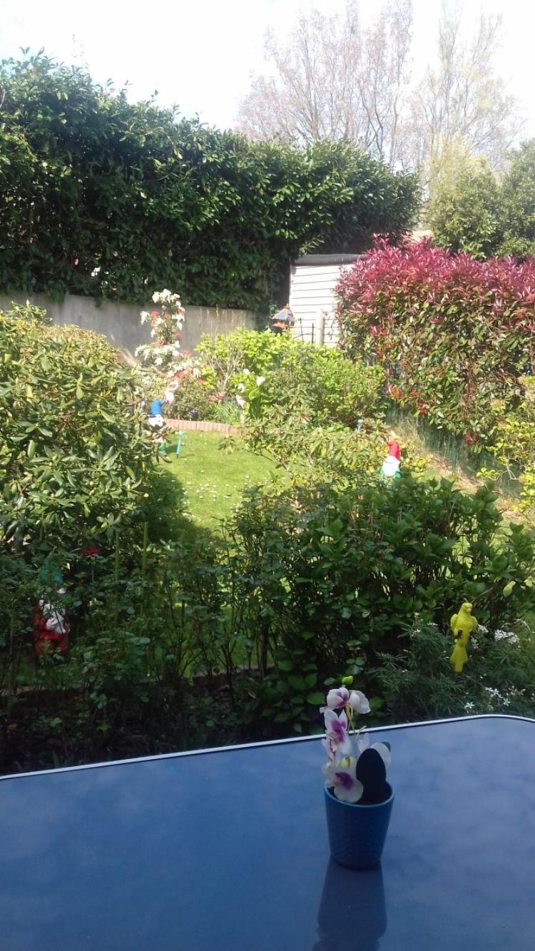 quelques photos de mon jardin
