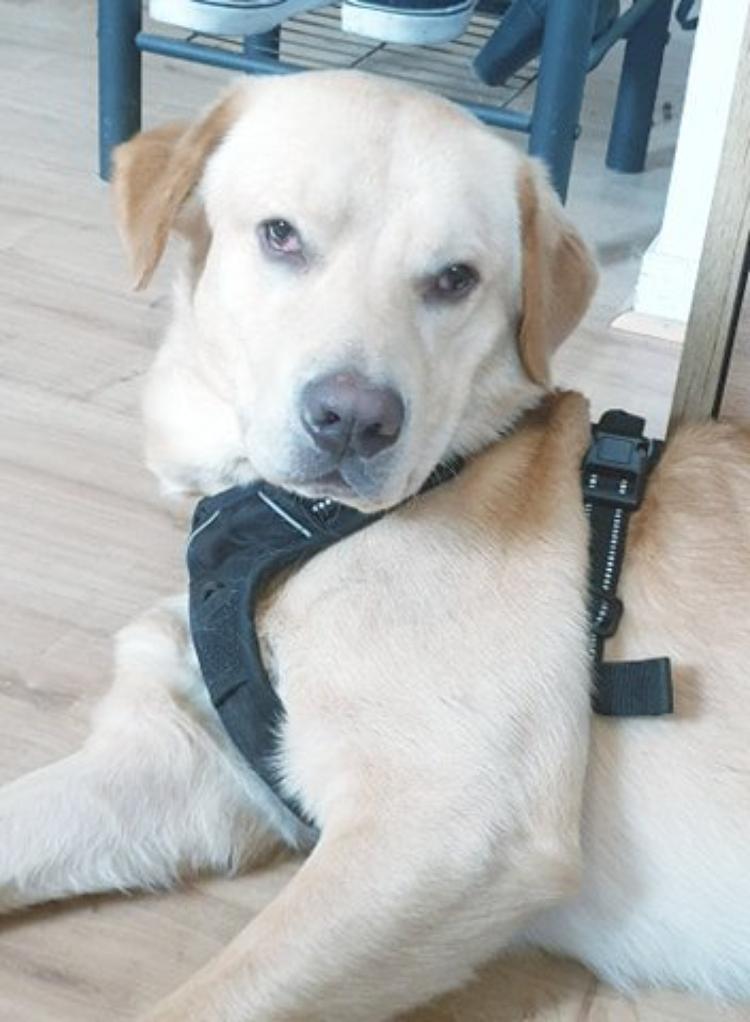 voila marlon  le chien de mon fils stevens