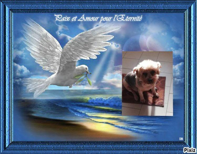 mon amie mybella 23 vient de perdre sa petite chienne princesse <repose en paix>