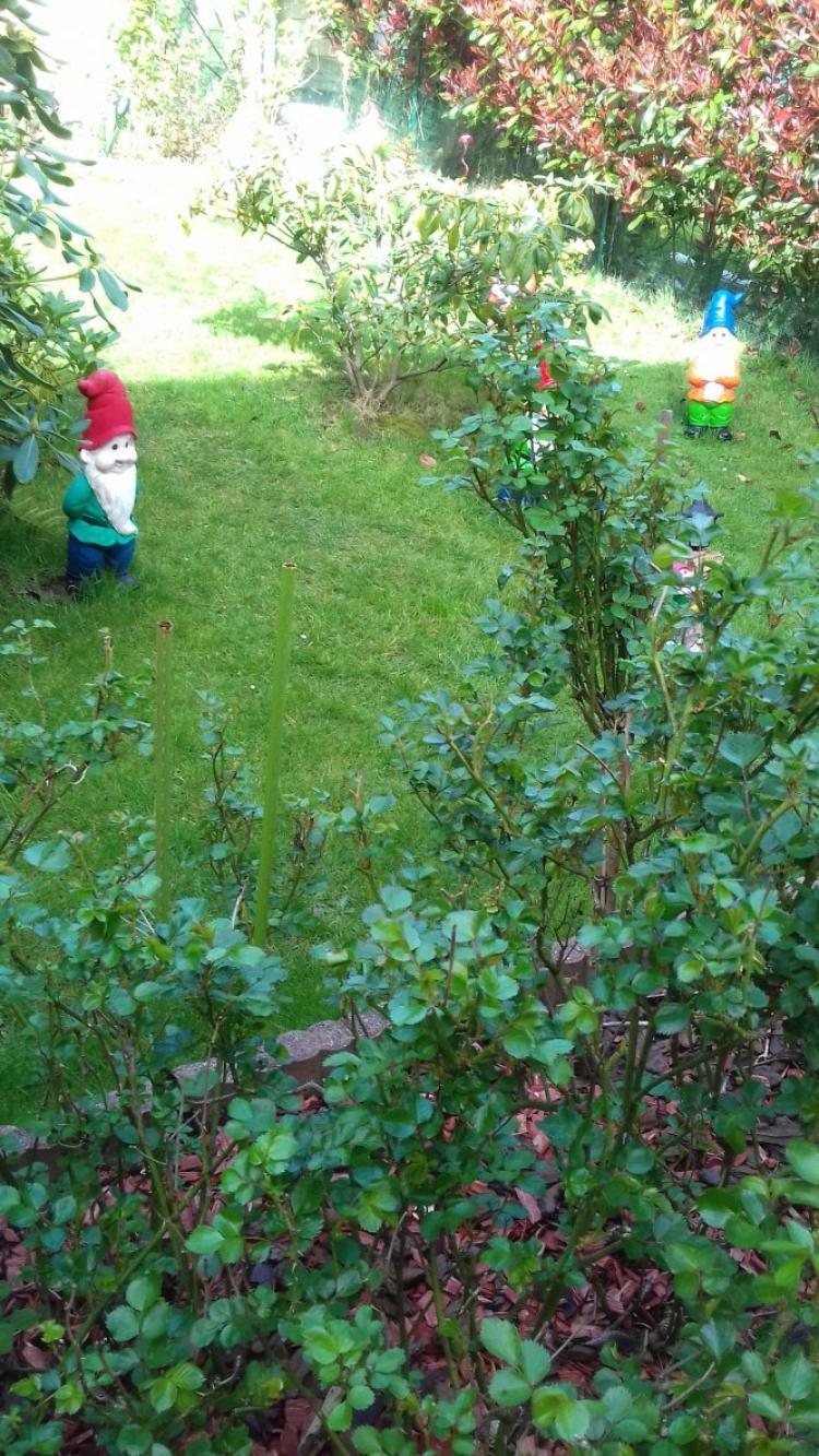 voila un peu du jardinage