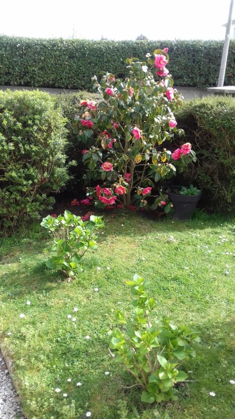 le soleil fait eclore les fleurs et lipton surveille lol!!!!
