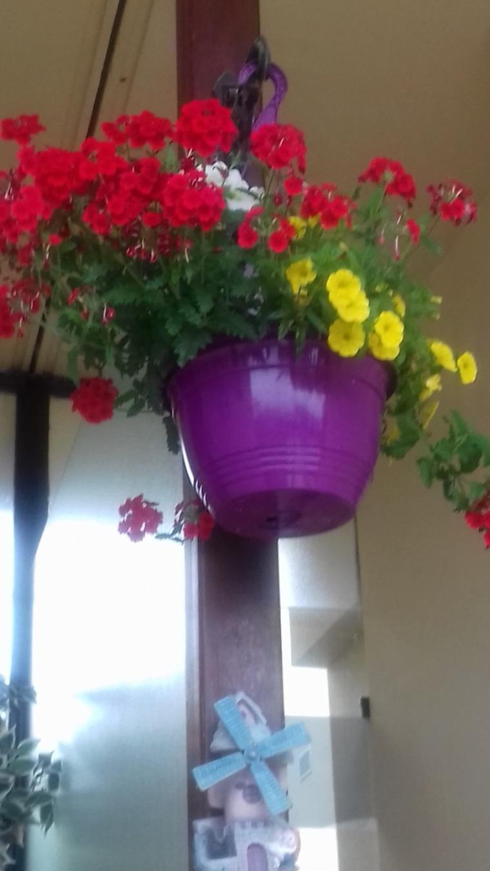 voila mon petit coin fleuri malgre que la pluie et le vent  a tout abimer