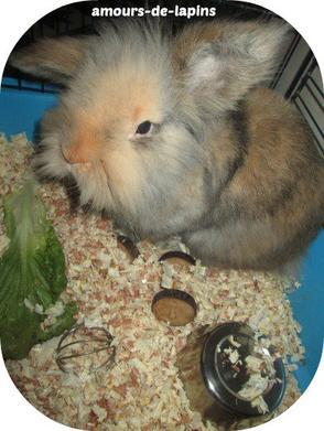 Teddy et la salade :)