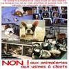 NE PAS ACHETER DES CHIOTS EN ANIMALERIE REGARDER POURQUOI?