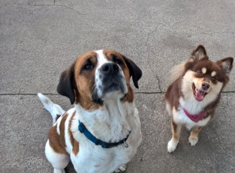 Calypso et Zinda <3