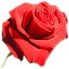 St Valentin (L)