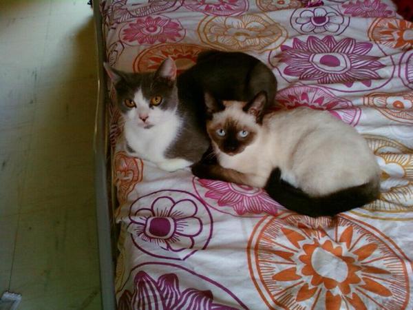 ~Les chats...