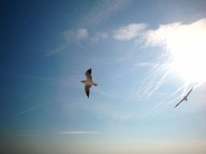 Fly away .
