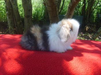 nouvele fotos de melodie des lapinous de liliane adopté par veronique