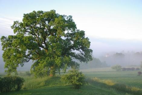 méditation et visualisation: les arbres