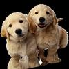 Les blogs Concours animaux