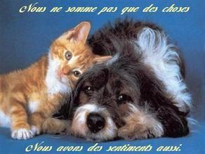Dites non à la maltraitance des animaux !!!