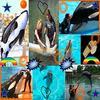 les outils et/ou obligatoires à l'apprentissage des dauphins.