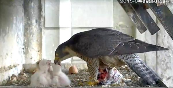 très belle capture d'images du live streaming de F5TJK