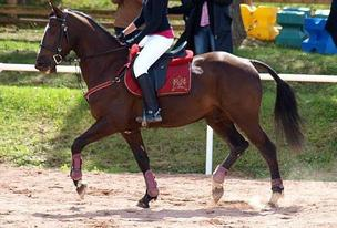 Blog De Tu Es Un Champion Page 2 Tu Es Un Champion Skyrock Com