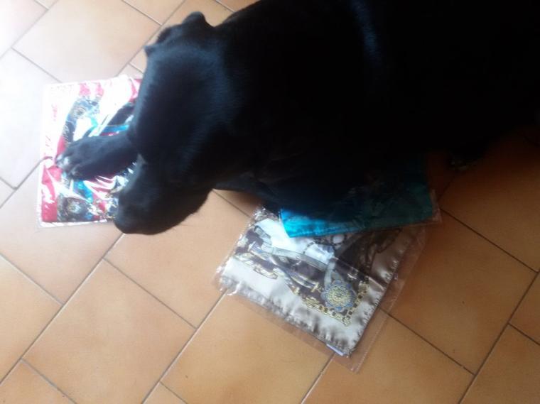 Derniers foulards reçus, ils intéressent bien Lily.