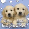 chien inseparable