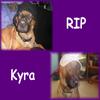 RIP Kyra
