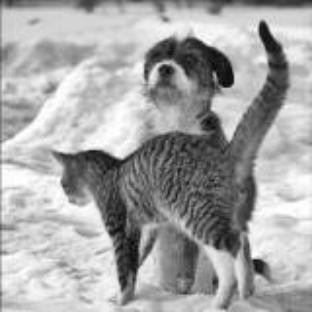 chien et chat amis ^^