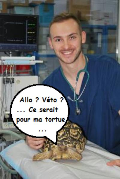 Liste des vétérinaires tortues
