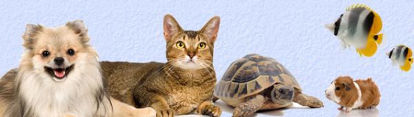 Ma tortue et les autres animaux domestiques !