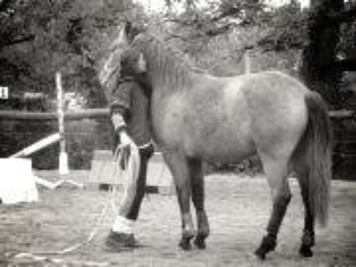 Un poney , un cavalier , une vie de reve ?