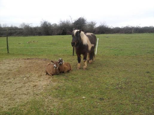 Janno mon poney , Marie et justine mes chévres