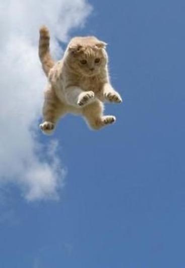 Des chats qui sautent...No fear!