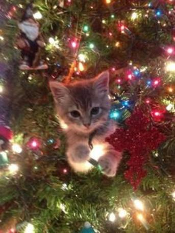 Christmas Cats Part 1