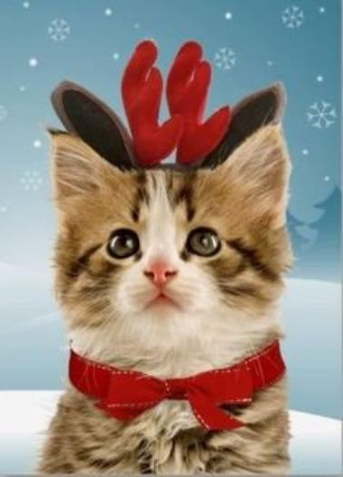 Christmas Cats Part 2
