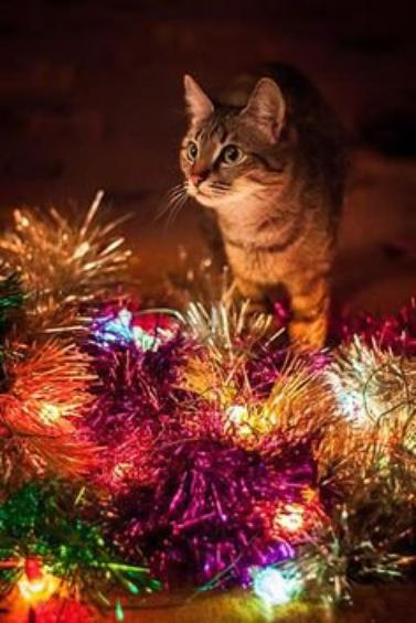 Christmas Cats Part 3