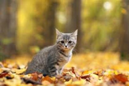 Chats d'automne...