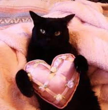Spécial St-Valentin