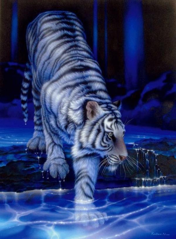La Majesté et La Puissance du  Tigre Blanc