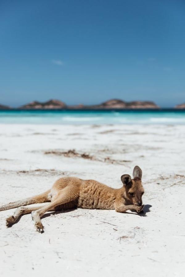 Le Côté Bleu de l' Australie !
