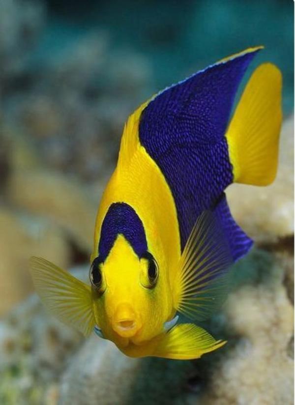 Du jaune et du violet, sur terre comme dans l'eau !