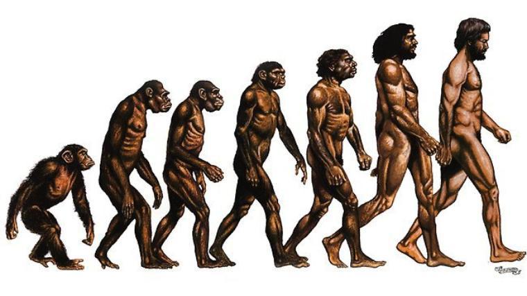 Evolution ok ¿?...
