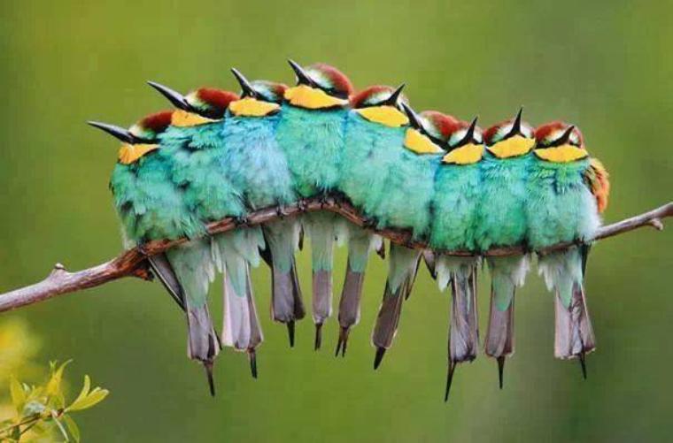 Beautée de la nature.